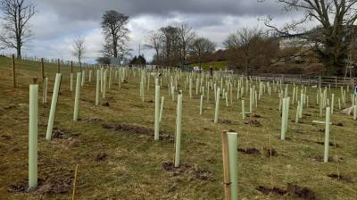 Volunteers plant 500 trees